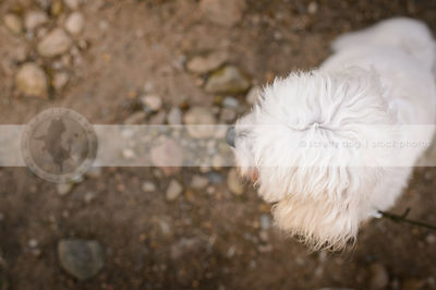 closeup of little fluffy dogs head on beach