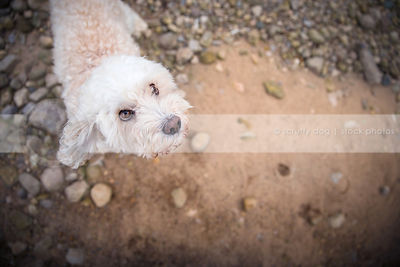 expressive little dog looking upward from sand and stones