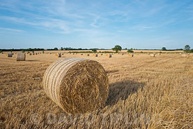 Hay bales at harvest near Thursford Norfolk August