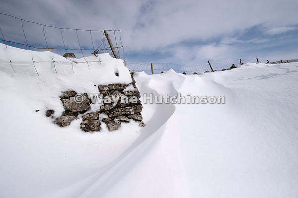Snowdrift, shaped by the wind at back of a drystone wall after a severe storm. Cumbria, UK