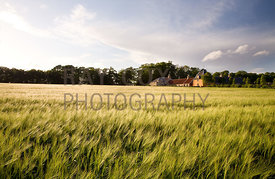 Steading viewed from barley field
