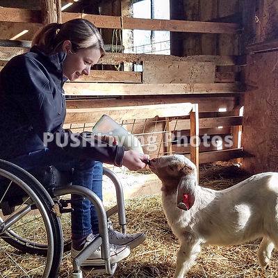 Young woman using a wheelchair bottle feeding a baby goat