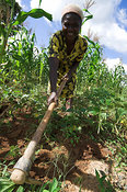 Woman cultivating soil with large hoe on farm Kenya Africa