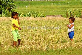 Playing in the rice fields