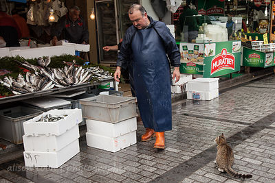 Cat waiting for a fish in the spice market, Istanbul