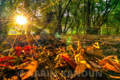 Autumn sunshine in the wood