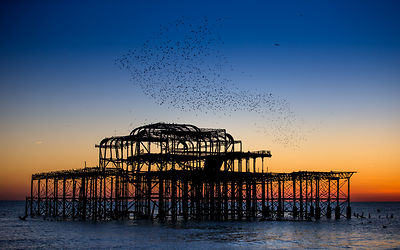Brighton Pier's  photos