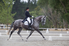 SI_Festival_of_Dressage_300115_Level_6_NCF_0161
