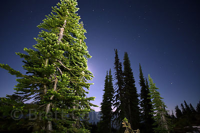 Night on the Deadhorse Creek Trail, Mount Rainier National Park, Washington