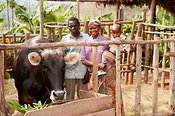 Rwandan family with thier jersey cow, donated by a charity to provide milk.