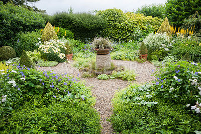 The Vean Garden is predominantly white, blue and gold, with clipped box and golden privet surrounded by lush perennials such as Leucanthemum x superbum 'Goldrausch', hardy geraniums, Alchemilla mollis, ligularias and variegated comfrey and phlox. At its centre is a shallow urn planted with Astelia nivicola 'Red Gem'.Bosvigo, Truro, Cornwall, UK