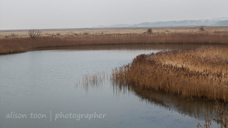 Wetlands, Cley and Blakeney