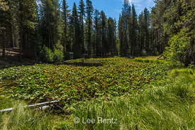 Lily Pond along Lily Pond Nature Trail in Lassen Volcanic National Park