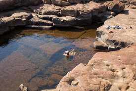 Taking a swim in a water hole near King George Falls in Australia's Kimberley.