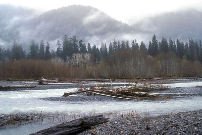 Classic temperate rainforest scene along the Hoh River, Olympic Rainforest, Washington.