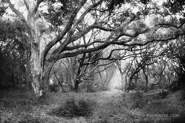 THROUGH THE DARK WOODS CUMBERLAND ISLAND GEORGIA BLACK AND WHITE