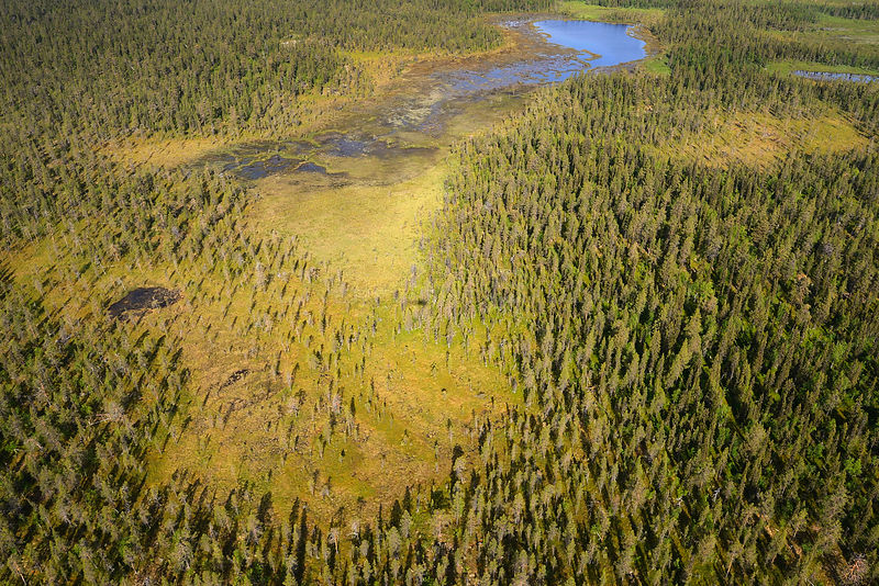 Aerial view of peat bogs and taiga boreal forest, Sjaunja Bird Protection Area, Greater Laponia Rewilding Area, Lapland, Norrbotten, Sweden, June 2013.