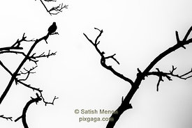 Bird and Branches Abstract, Don Edwards Wildlife Refuge, Alviso, CA, USA