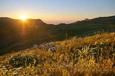 Sun setting behind a mountain ridge, restios and other fynbos plants in foreground glowing in the light (backlit), green, vegetated valley behind.