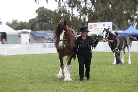 HOY_220314_Clydesdales_2388