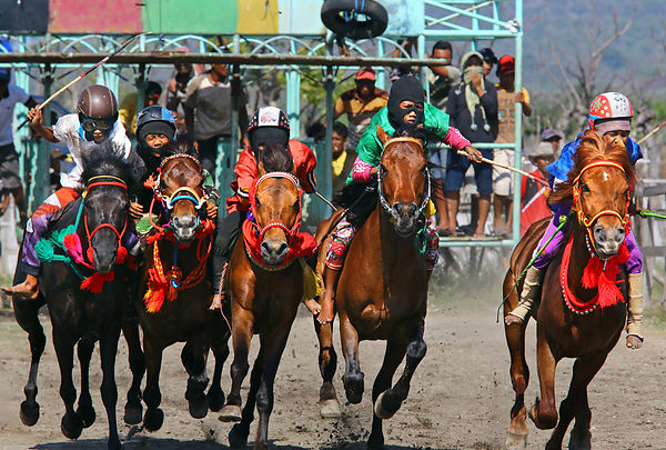 During the Moyo festival on the island of Sumbawa in Indonesia horse races are held for a week on the racecourse of Sumbawa Besar, the regional capital. The jockeys are children and are between 5 and 12 years old.