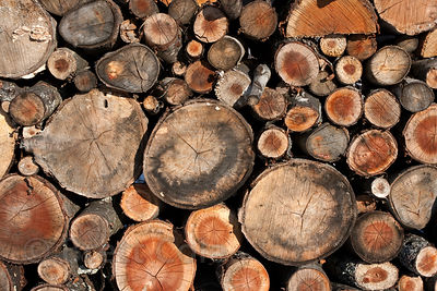 Texture on cut wood in a woodpile on a farm, Hudson, New York
