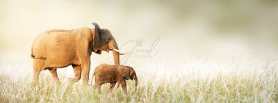 Mom and Baby Elephant Walking Through Tall Grass