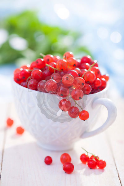 Red currants in a cup