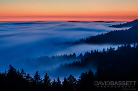 Misty Mountain Top | Mt Tamalpais, CA