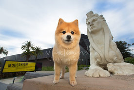 Cute Pomeranian Next to Sphinx Statue