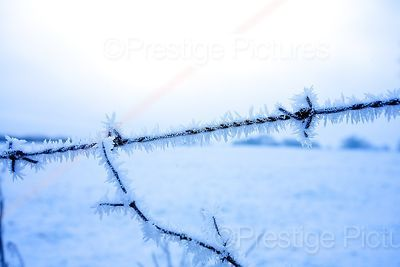 Barbed Wire Edged with Frost
