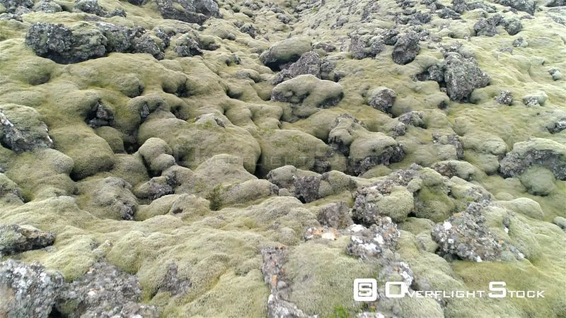 Lava Field Rocks Covered in Thick Green Moss Aerial Drone Flyover Berserkjahraun Iceland 4k