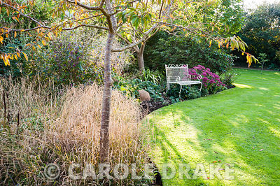 Afternoon sun casts shadows across a lawn near a white bench set into an autumn border planted with grasses and sedum. Private Garden, Dorset, UK