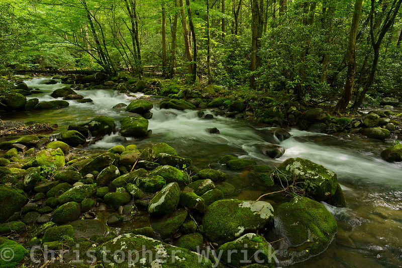 Beautiful image of Porter's Creek.  The excellent detail of the rocks and trees along with the creamy water give me a very peaceful feeling.  Awesome image for a large print.