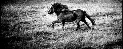 Wild horse alone in the hill, Iceland 2015 © Laurent Baheux