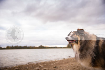 longhaired dog with eyes closed standing at lake with stormy sky