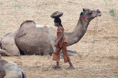 A girl collects camel dung to use for fire fuel in Pushkar, Rajasthan, India