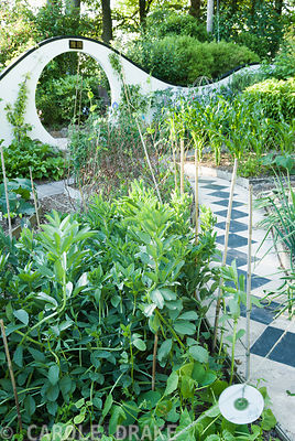 Kitchen garden features raised beds curved to fit the pathways, with curving wall pierced by moon gate beyond. Beggars Knoll, Newtown, Westbury, Wiltshire, BA13 3ED, UK
