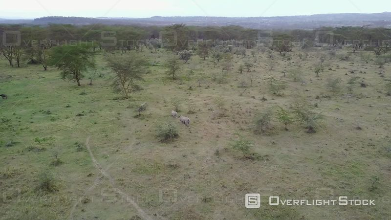 Aerial View of a Group of Rhinoceros at Masai Mara Reserve, Filmed by Drone, Kenya