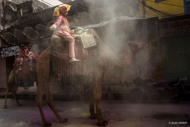 holi_with_camel