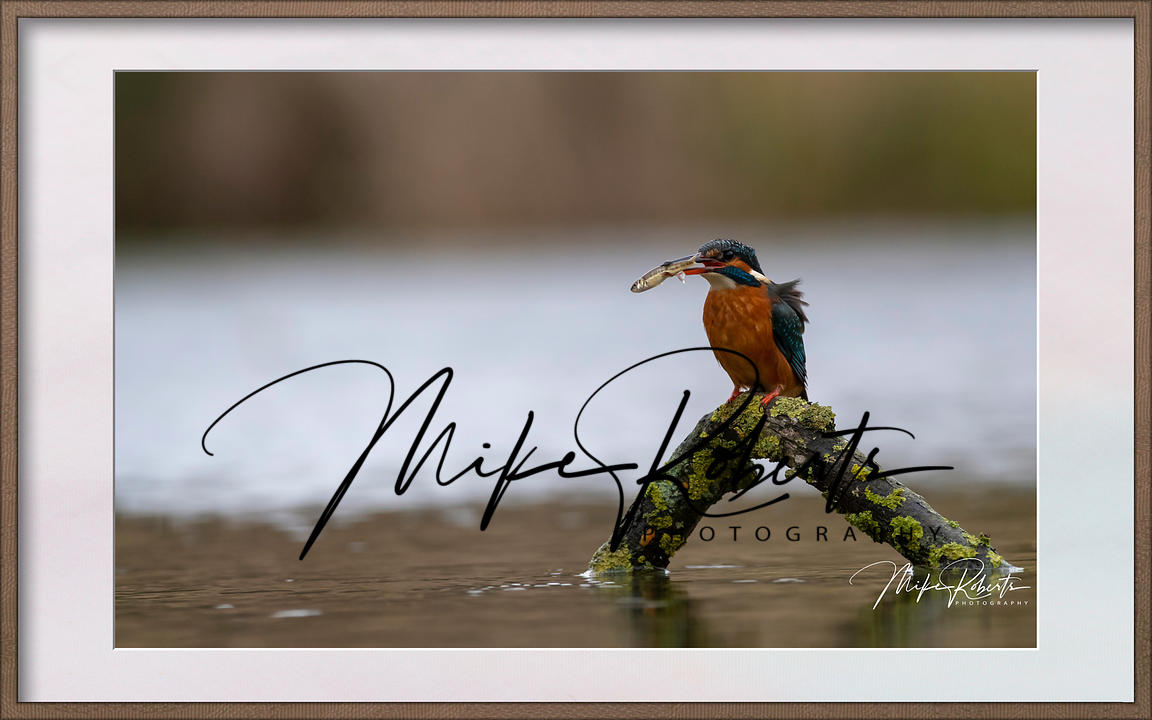 kingfisher-23-Edit