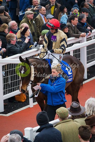 Cheltenham_Gold_Cup_Day_2015_-254