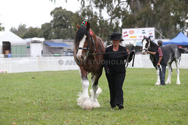 HOY_220314_Clydesdales_2389