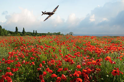 Poppies and Polish Spitfire Vb