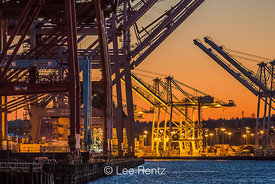 The Container Cranes of Terminals 46 and 18 at the Port of Seattle Seaport