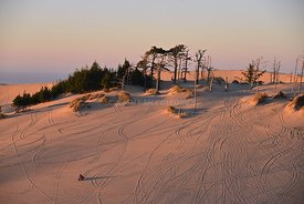 Winchester Bay Dunes