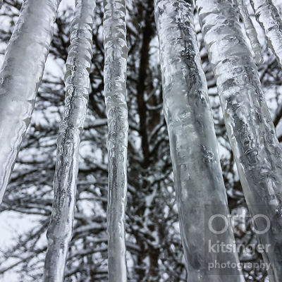 icicles and ash tree