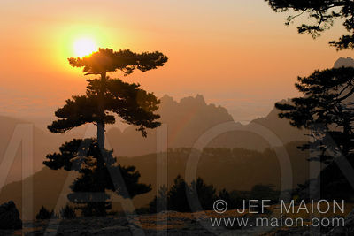 Sunrise and stone pine silhouette