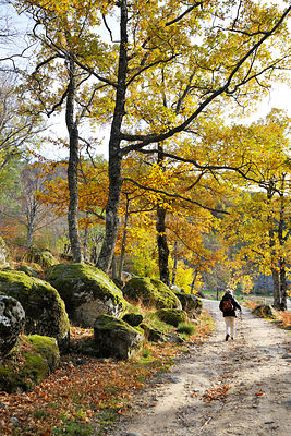 Medieval path with beech trees and chestnut trees in autumn time. Serra da Estrela Nature Park, Portugal (MR)
