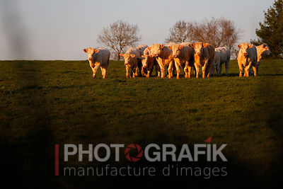KEY WORDS: WORLD / FRANCE / CHAROLAIS BRIONNAIS